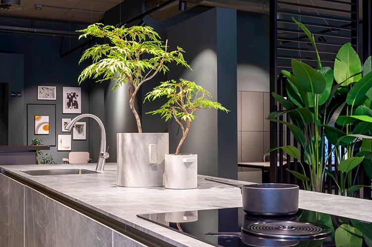 Keukenplanten